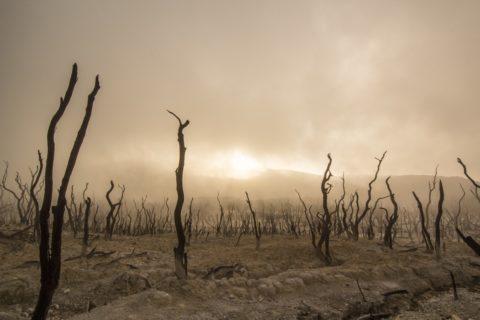 ocieplanie sie klimatu