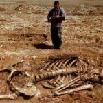 wielki szkielet